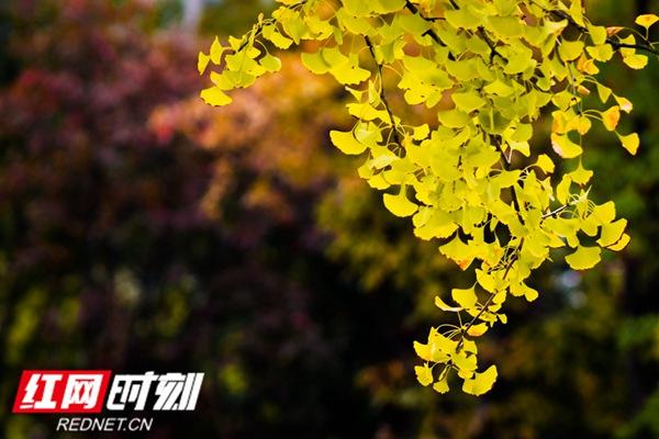 邂逅五彩的叶 静赏莲城的秋图片