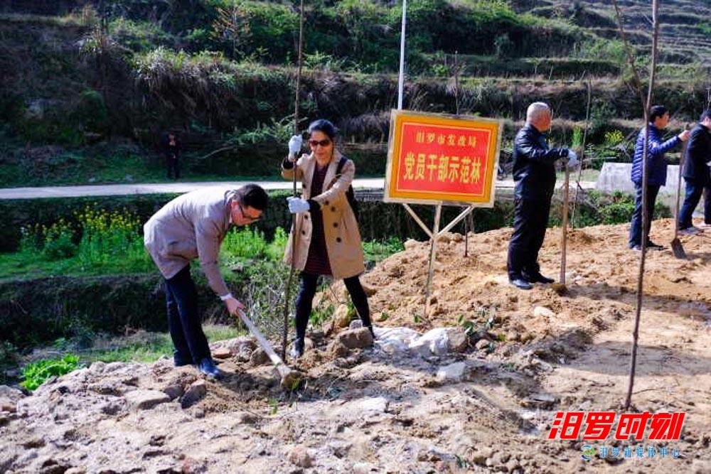 白鹤洞村:春风吹绿脱贫路