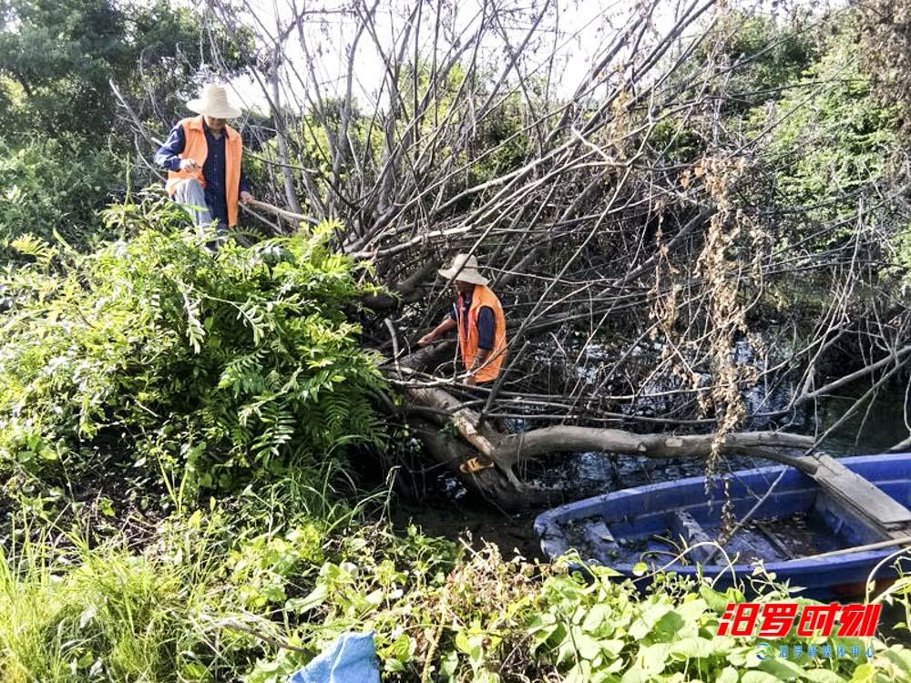 桃林寺镇:老兵带队清河去淤惠村民