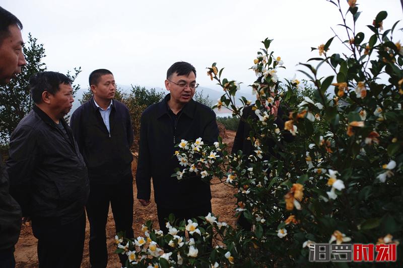 打响油茶品牌激发内生动力,林治学调研油茶产业发展